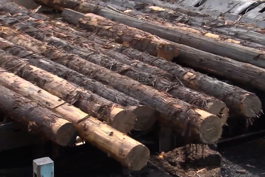 Лесные компании увеличивают производство, так как спрос на туалетную бумагу увеличивается более чем на 200%