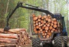 Австрия: огромное рыночное и ценовое давление на древесину из-за рекордного количества поврежденной древесины