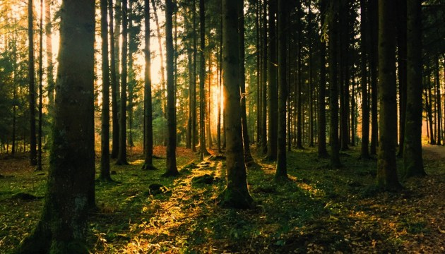 Деревообрабатывающая индустрия в условиях кризиса