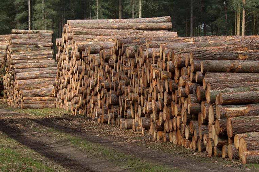Цены на круглый лес в Литве резко упали в марте 2020 года