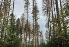 Заражение лесов короедами начинает распространяться в странах Центральной Европы