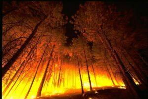 Read more about the article Страховое лобби усмотрело в лесу источник заработка