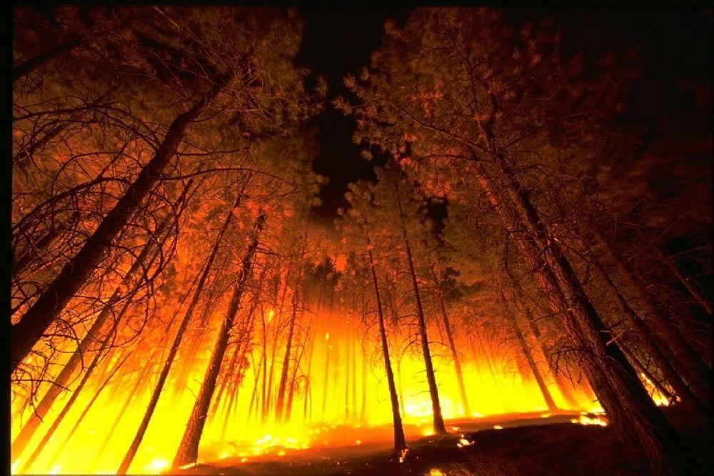 Страховое лобби усмотрело в лесу источник заработка