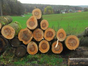 Теперь дешевле: в лесах Чехии возобновилась возможность продавать древесину населению.