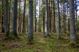 Литва: Лесной кризис набирает обороты — почти половина покупателей древесины останавливает закупки