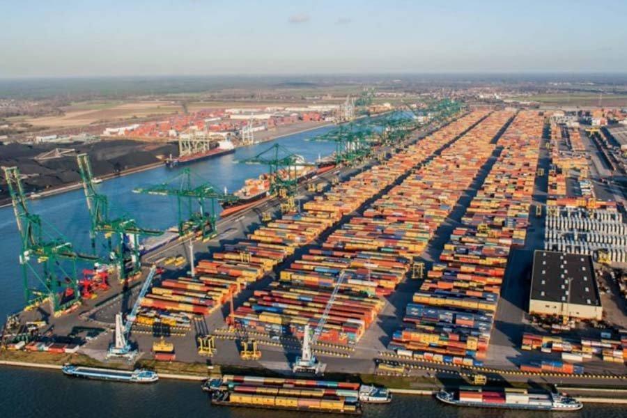 Европейские импортеры древесины приостановили заказы
