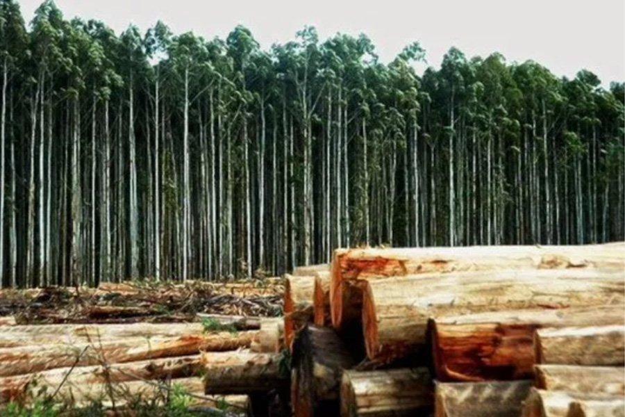 Аргентина: худшее время в лесной промышленности за последние 50 лет