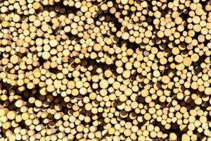 Тенденция к росту цен на российские лесоматериалы