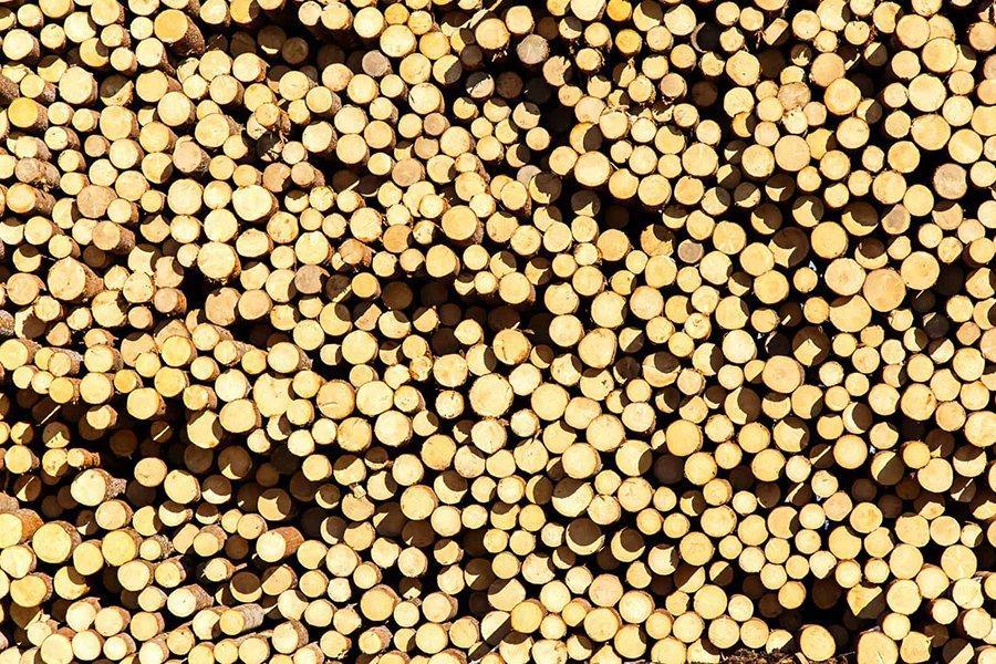 You are currently viewing Тенденция к росту цен на российские лесоматериалы