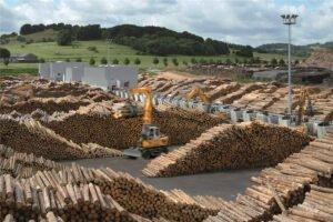 Избыток приводит к резкому падению цен на пиловочник по всей Европе