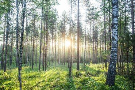 You are currently viewing Опубликован доклад о политике лесного хозяйства в Европе после 2020 года