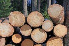 Могут ли деревянные здания быть решением проблемы изменения климата?