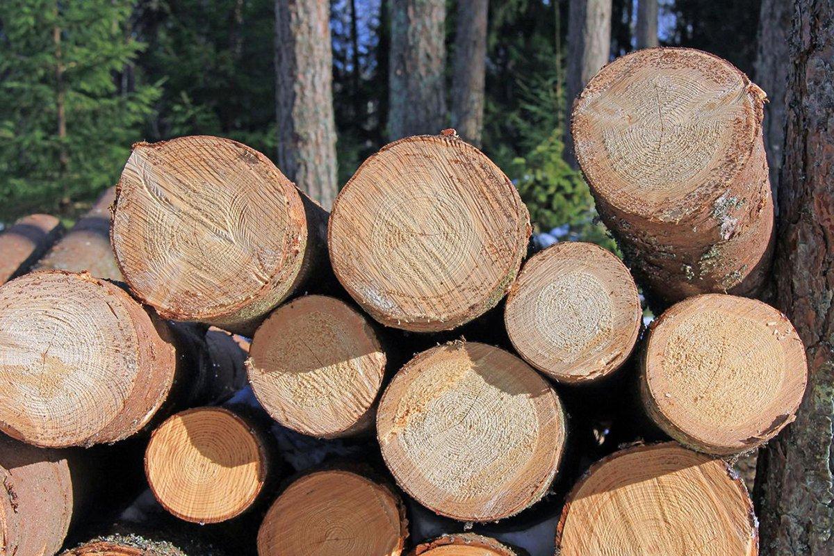 You are currently viewing Могут ли деревянные здания быть решением проблемы изменения климата?
