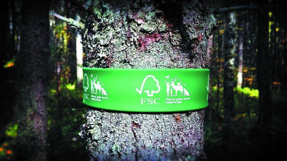 Важная тенденция: FSC обсуждает подходы к формированию хозяйственно-ценных молодняков в сертифицированных лесах