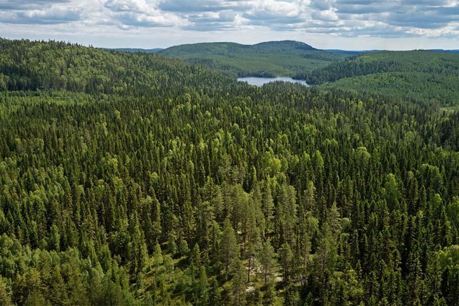 Швеция: Sveaskog инвестирует 100 млн шведских крон в производство лесных растений