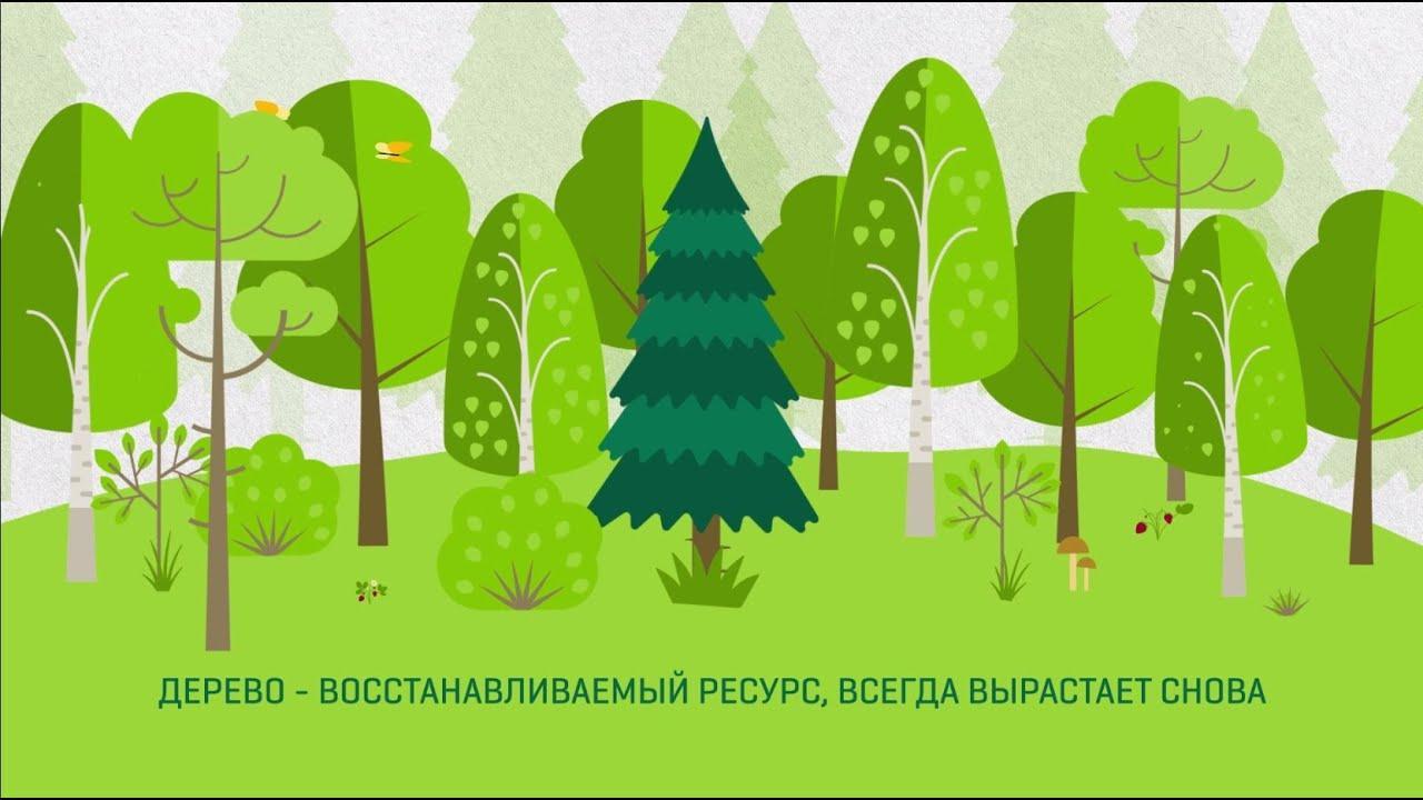 ВИДЕО: молодые деревья связывают углерод, а когда гниют, возвращают его в атмосферу