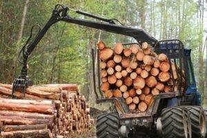 Чешская Республика: увеличение экспорта круглых лесоматериалов на 145%