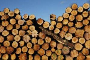 Австрия: массовое снижение цен на круглые лесоматериалы из-за заражения короедами и коронавирусного кризиса