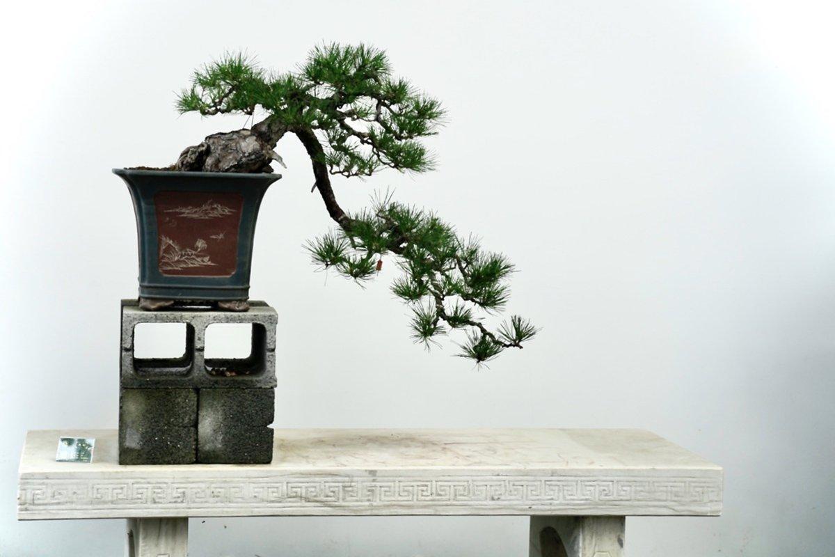 You are currently viewing Деревья бонсай превращаются в большой бизнес в провинции Цзянсу в Китае