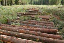 Временное обязательство австрийской лесопильной промышленности покупать поврежденную древесину