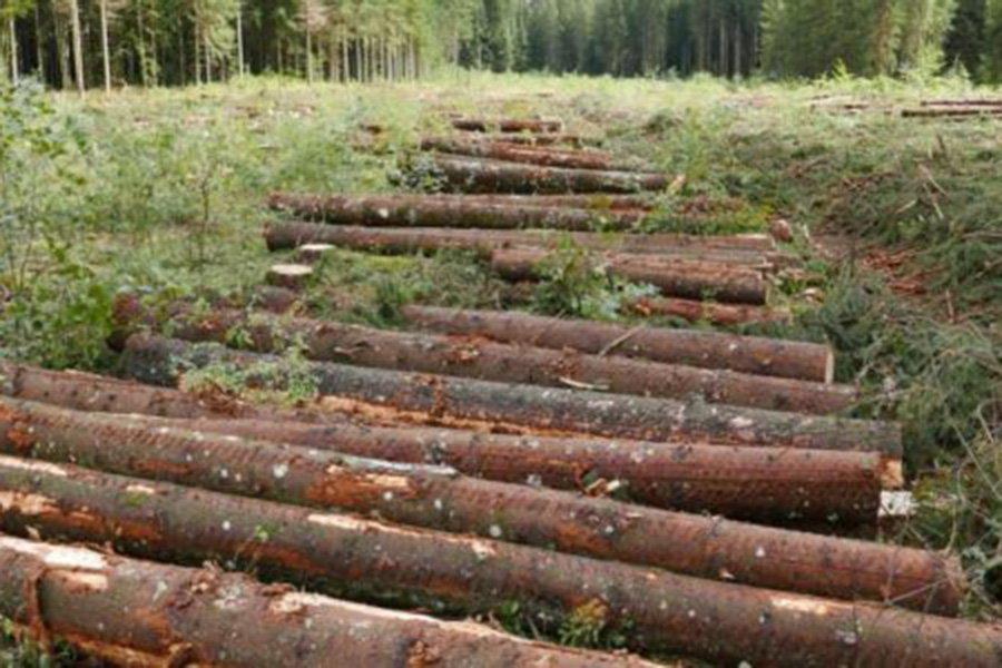 You are currently viewing Временное обязательство австрийской лесопильной промышленности покупать поврежденную древесину