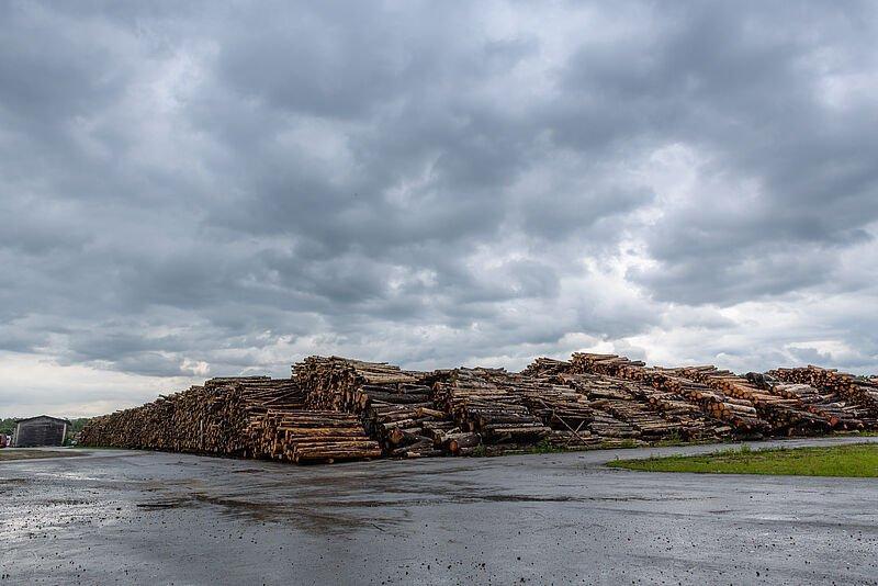 You are currently viewing Федеральные леса Австрия открывают новые склады древесины в Амштеттене