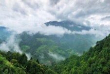 Пересмотренный закон Китая о лесах вступит в силу в июле