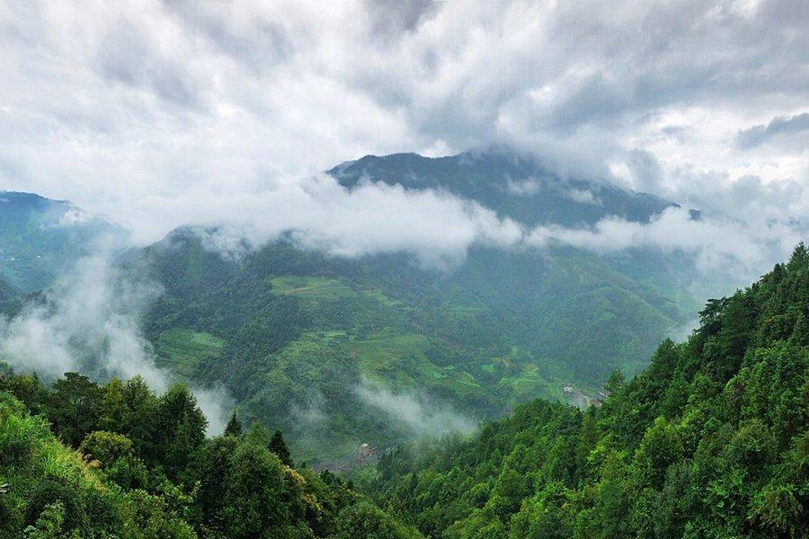 You are currently viewing Пересмотренный закон Китая о лесах вступит в силу в июле