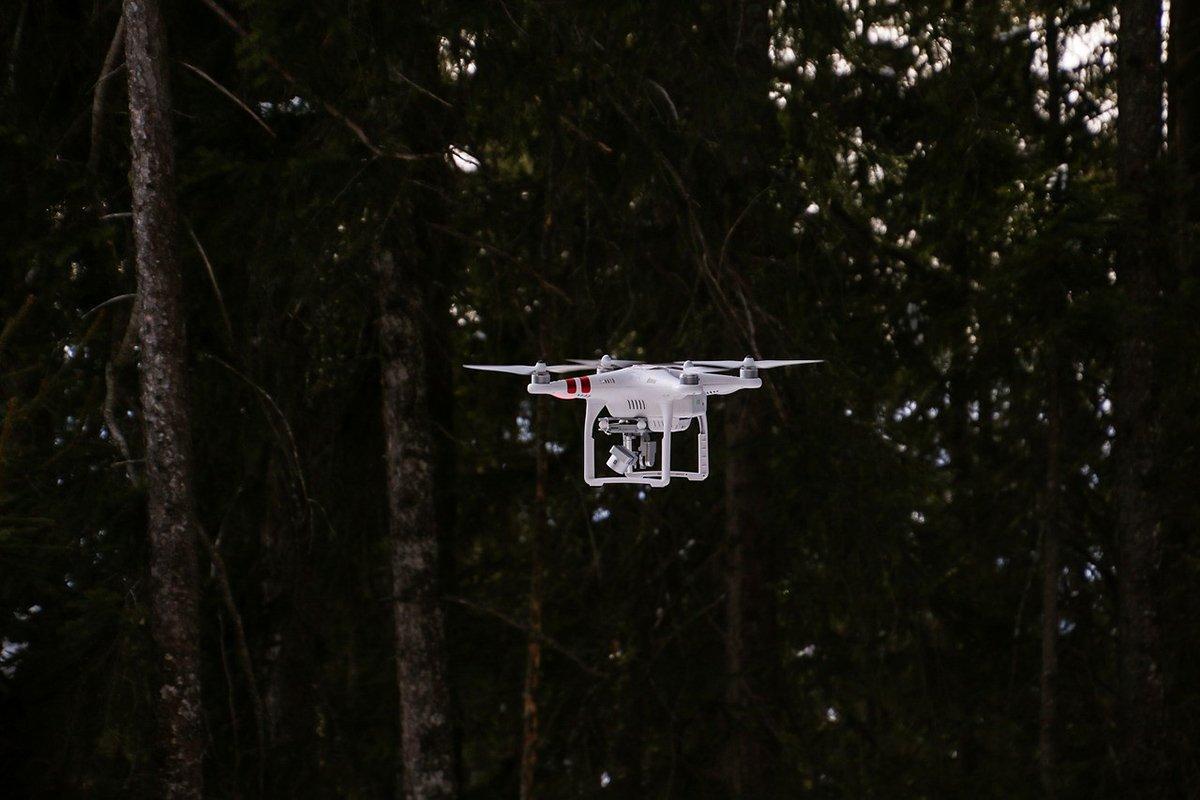 Операторы беспилотников сканировали тысячи деревьев: повреждения насекомых были обнаружены с воздуха