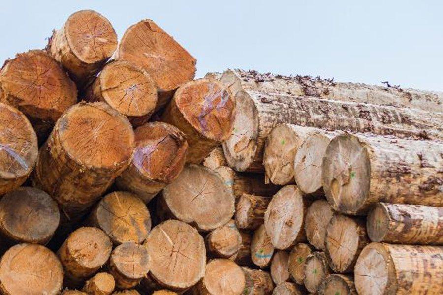 В апреле 2020 г. стоимость сделок с круглым лесом в Словении снизилась на 46%