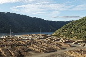 Отсутствие спроса в Китае вызывает резкое падение цен на сосну Радиата в Новой Зеландии