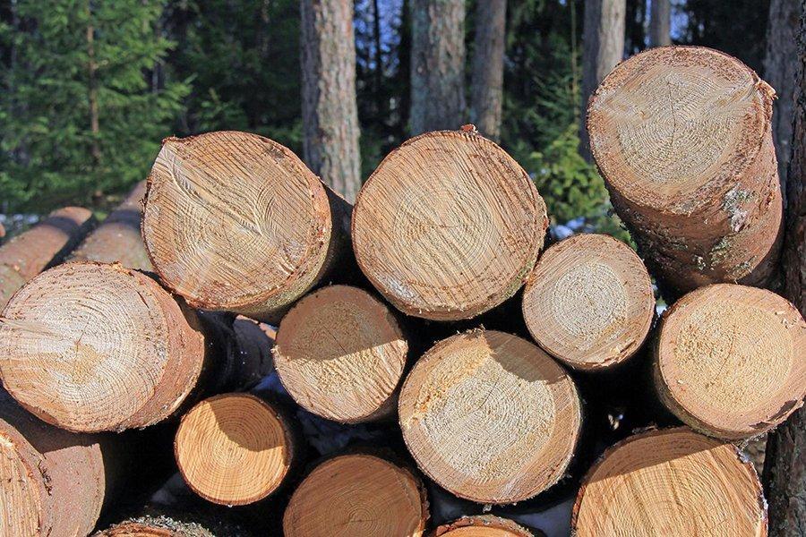 Эстония: цены на круглые лесоматериалы увеличились в конце апреля