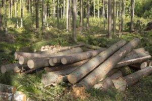 Цены на круглые лесоматериалы в Финляндии в апреле 2020 года снизились