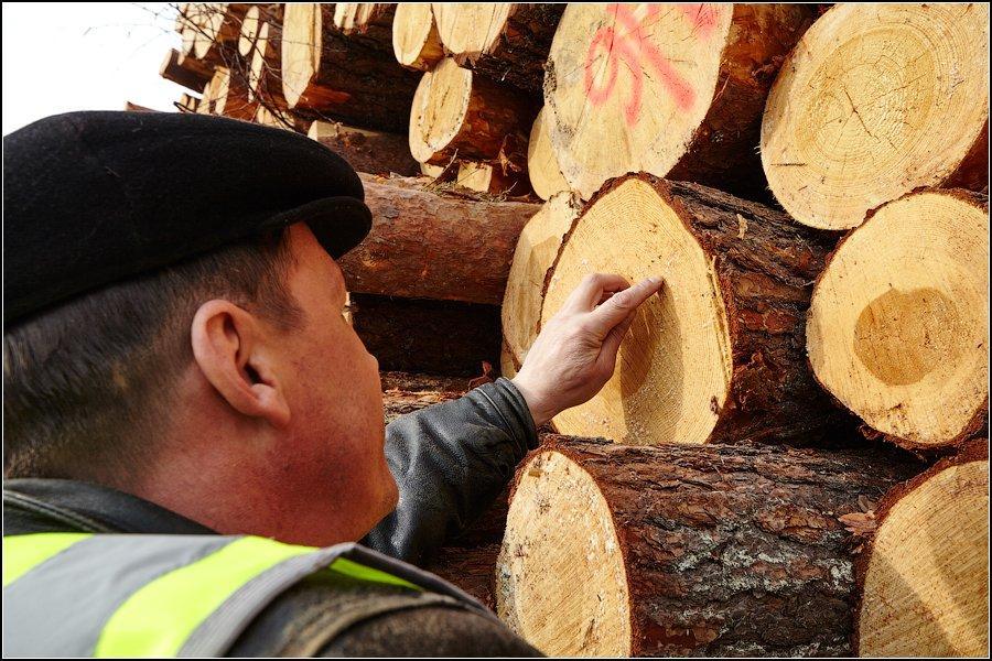 Segezha Group завершила тестирование мобильного приложения Smart Timber по измерению плотного объема круглого леса