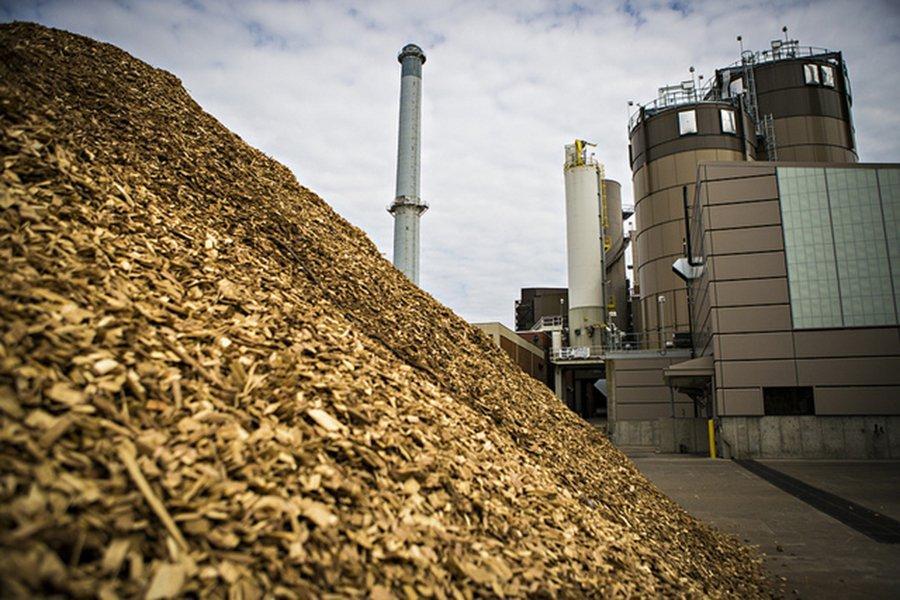 Голландцы решили: сжигание биомассы не является устойчивым