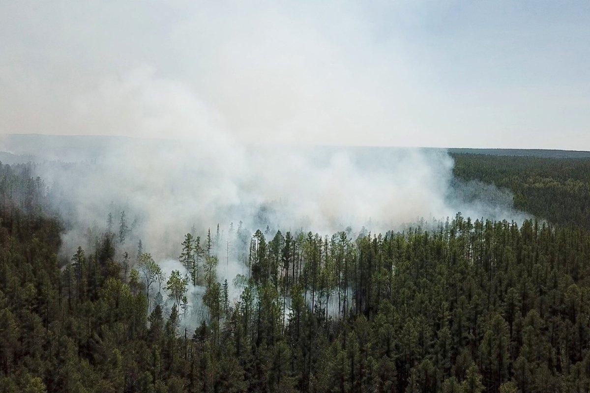Почти 300 лесных пожаров в Сибири на фоне рекордно теплой погоды