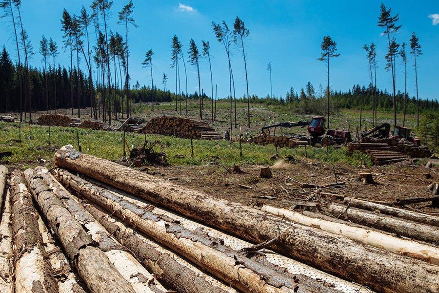 Поврежденная европейская древесина вторгается на китайский рынок древесины