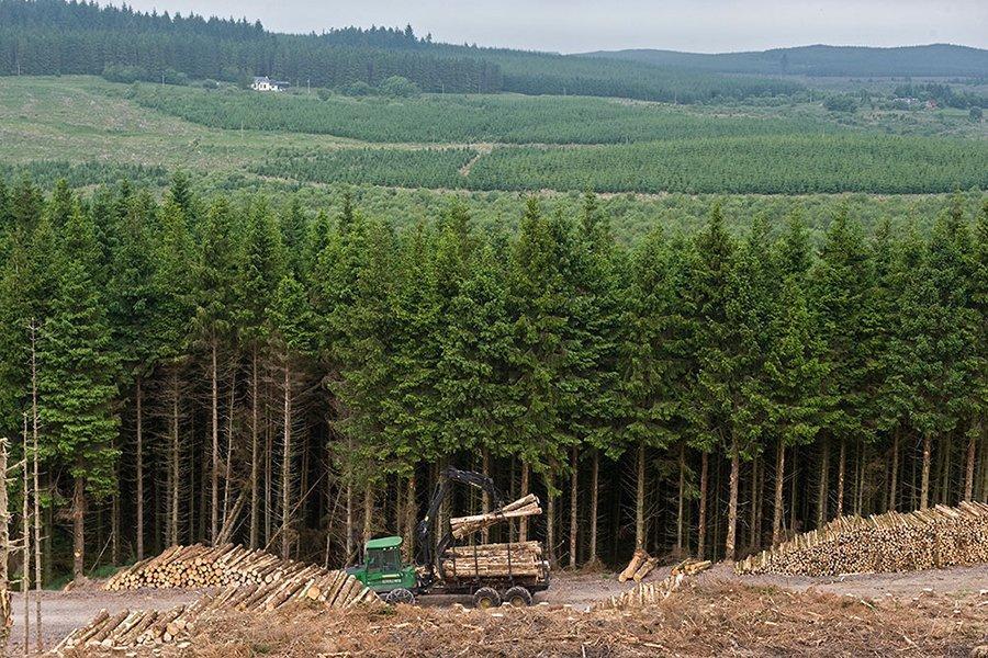 Импорт эвкалиптового круглого леса продолжает расти