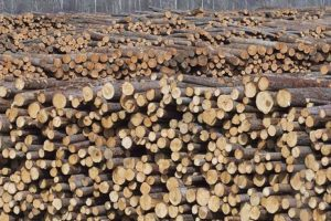 Торговля круглым лесом в Финляндии сократилась на 30%