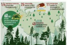 Новая стратегия развития для лесопромышленного комплекса