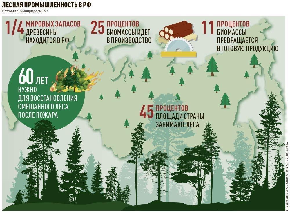 You are currently viewing Новая стратегия развития для лесопромышленного комплекса