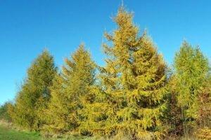 Ученые создали метод одностадийной переработки древесины в целлюлозу и ванилин