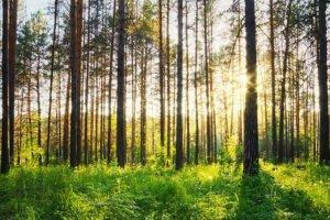Vodafone, Defra and Forest Research — пробное техническое решение для защиты лесов Великобритании и борьбы с изменением климата