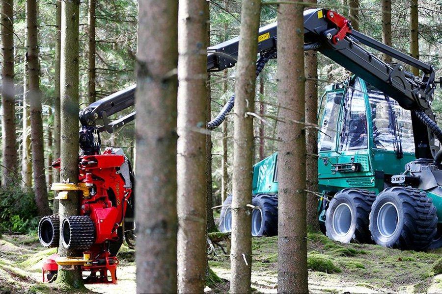 Утвержден новый план заготовки леса, повышающий объем заготовки и увеличение денежного дохода
