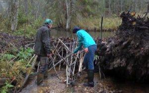 Управление водными ресурсами в лесах стран Балтийского региона