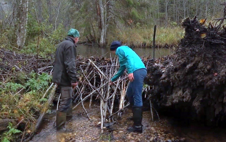 You are currently viewing Управление водными ресурсами в лесах стран Балтийского региона