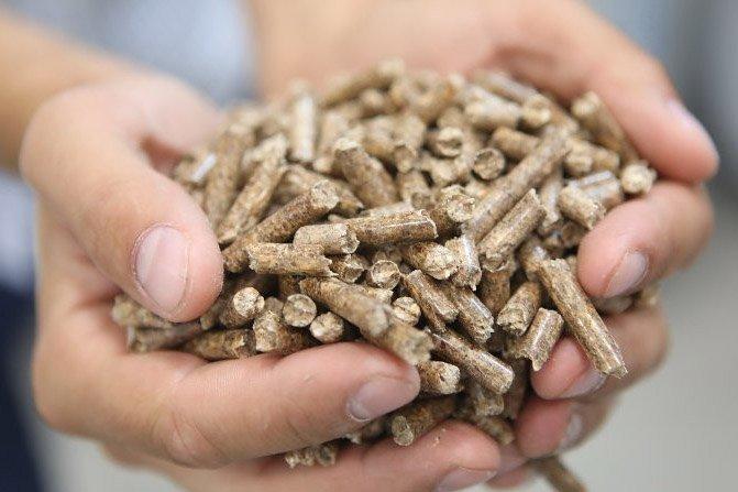 Белорусские пеллеты отправятся на европейский рынок — Минлесхоз