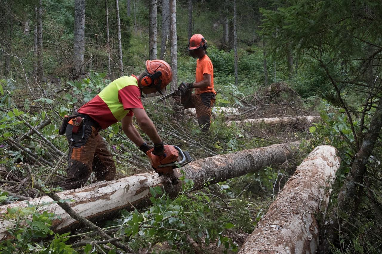 You are currently viewing Ассоциация лесовладельцев Швейцарии: Лесу нужны перспективы