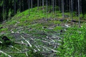 Попав в тяжелое экономическое положение «Леса Чешской Республики» уменьшают число региональных дирекций