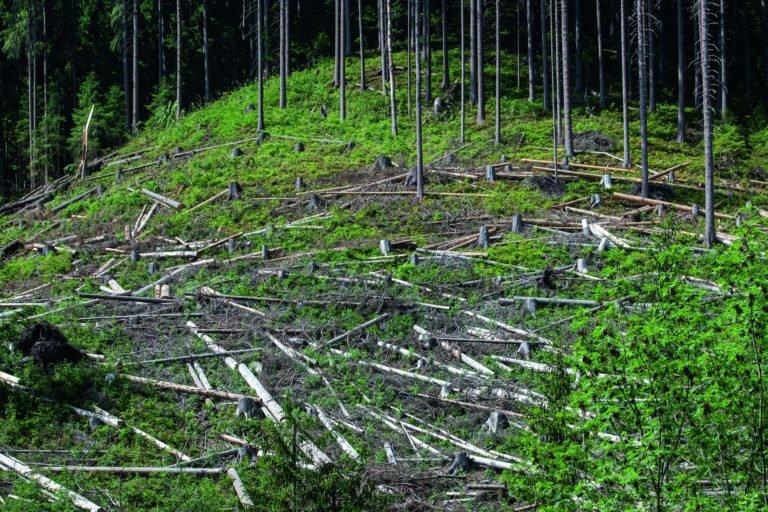 You are currently viewing Попав в тяжелое экономическое положение «Леса Чешской Республики» уменьшают число региональных дирекций